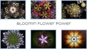 BloominFlowerPowercover