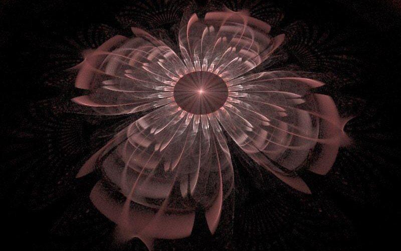 Zsuzsas Flower 3D Image