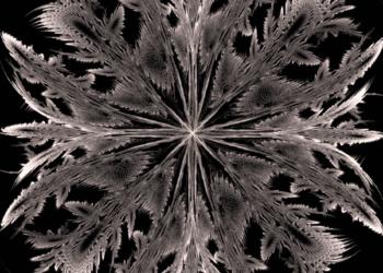 Feathery Stars